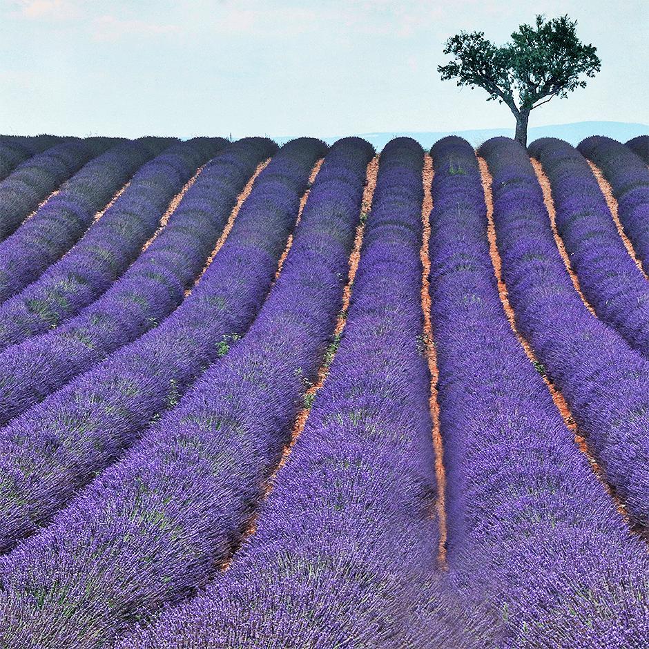 3_Lavendel_940x940_5