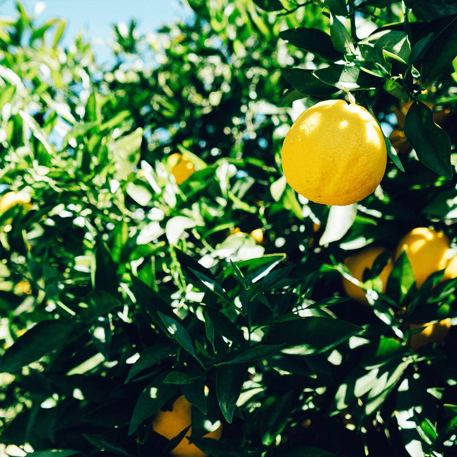 Lemon_940x940_3